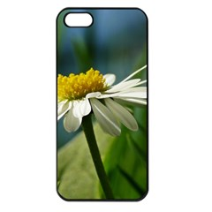 Daisy Apple Iphone 5 Seamless Case (black) by Siebenhuehner