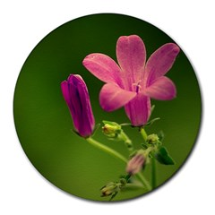 Campanula Close Up 8  Mouse Pad (round) by Siebenhuehner