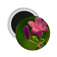 Campanula Close Up 2 25  Button Magnet by Siebenhuehner