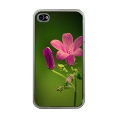 Campanula Close Up Apple Iphone 4 Case (clear) by Siebenhuehner