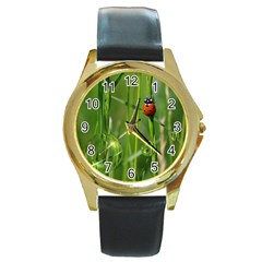 Ladybird Round Metal Watch (gold Rim)
