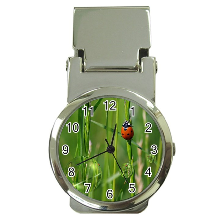 Ladybird Money Clip with Watch