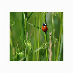 Ladybird Canvas 24  X 36  (unframed) by Siebenhuehner