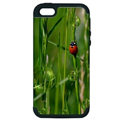 Ladybird Apple Iphone 5 Hardshell Case (pc+silicone) by Siebenhuehner