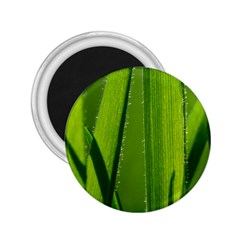 Grass 2 25  Button Magnet by Siebenhuehner