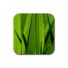 Grass Drink Coaster (square)
