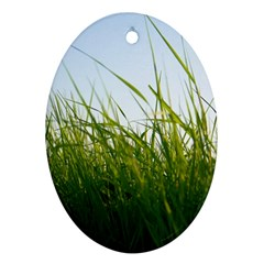 Grass Oval Ornament (two Sides) by Siebenhuehner