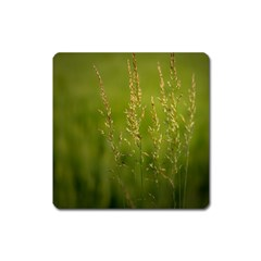 Grass Magnet (square) by Siebenhuehner