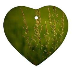 Grass Heart Ornament (two Sides) by Siebenhuehner