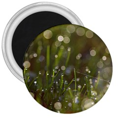 Waterdrops 3  Button Magnet by Siebenhuehner