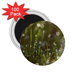 Waterdrops 2 25  Button Magnet (100 Pack)