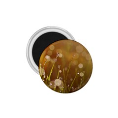Waterdrops 1 75  Button Magnet