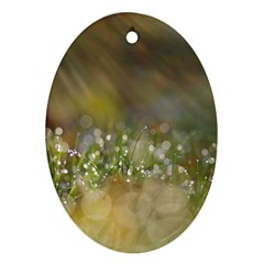 Sundrops Oval Ornament by Siebenhuehner