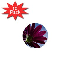 Daisy 1  Mini Button (10 Pack) by Siebenhuehner