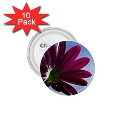 Daisy 1 75  Button (10 Pack) by Siebenhuehner