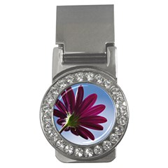 Daisy Money Clip (cz) by Siebenhuehner