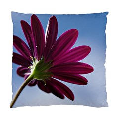 Daisy Cushion Case (single Sided)  by Siebenhuehner
