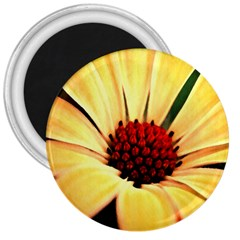 Osterspermum 3  Button Magnet by Siebenhuehner
