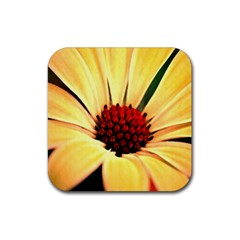 Osterspermum Drink Coasters 4 Pack (square) by Siebenhuehner