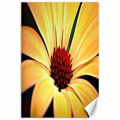 Osterspermum Canvas 24  X 36  (unframed) by Siebenhuehner