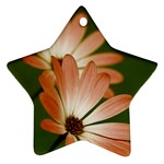 Osterspermum Star Ornament (Two Sides) Back