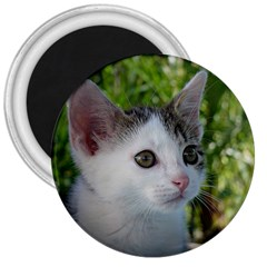 Young Cat 3  Button Magnet by Siebenhuehner