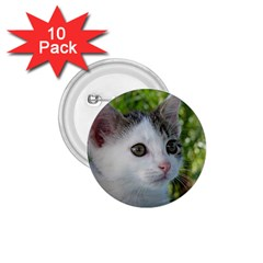 Young Cat 1 75  Button (10 Pack)