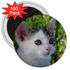 Young Cat 3  Button Magnet (100 Pack)
