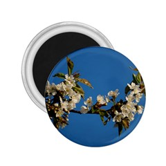 Cherry Blossom 2 25  Button Magnet by Siebenhuehner