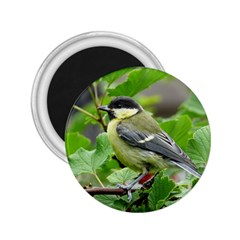 Songbird 2 25  Button Magnet by Siebenhuehner