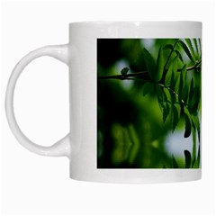 Leafs With Waterreflection White Coffee Mug by Siebenhuehner