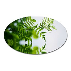 Leafs With Waterreflection Magnet (oval) by Siebenhuehner