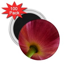 Poppy 2 25  Button Magnet (100 Pack) by Siebenhuehner