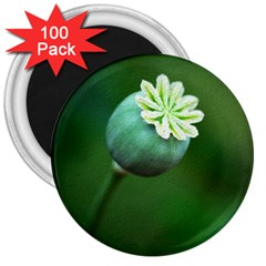 Poppy Capsules 3  Button Magnet (100 Pack) by Siebenhuehner