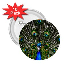 Peacock 2 25  Button (10 Pack) by Siebenhuehner