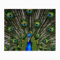 Peacock Glasses Cloth (small) by Siebenhuehner