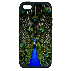 Peacock Apple Iphone 5 Hardshell Case (pc+silicone) by Siebenhuehner