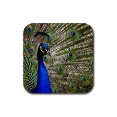 Peacock Drink Coasters 4 Pack (square) by Siebenhuehner