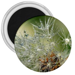 Dandelion 3  Button Magnet by Siebenhuehner