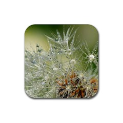 Dandelion Drink Coasters 4 Pack (square) by Siebenhuehner