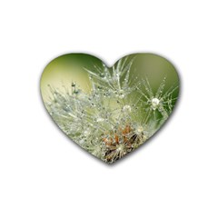 Dandelion Drink Coasters 4 Pack (heart)  by Siebenhuehner
