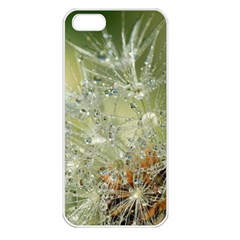 Dandelion Apple Iphone 5 Seamless Case (white) by Siebenhuehner