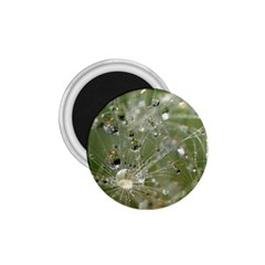 Dandelion 1 75  Button Magnet by Siebenhuehner