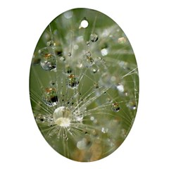 Dandelion Oval Ornament by Siebenhuehner