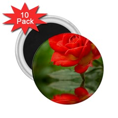 Rose 2 25  Button Magnet (10 Pack) by Siebenhuehner