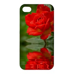 Rose Apple Iphone 4/4s Hardshell Case by Siebenhuehner