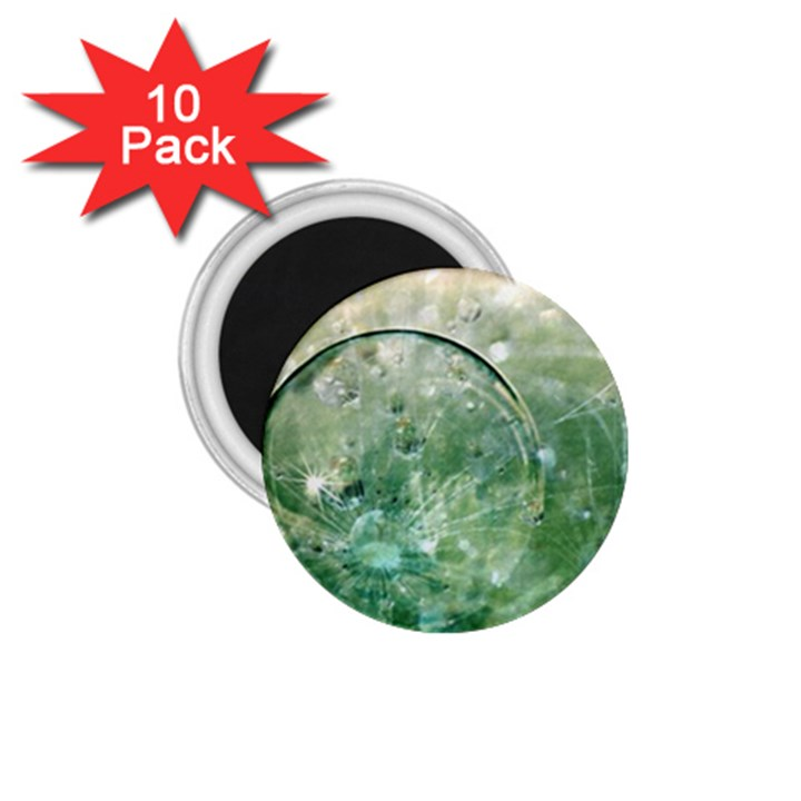 Dreamland 1.75  Button Magnet (10 pack)