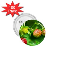 Strawberry  1 75  Button (100 Pack)