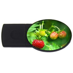 Strawberry  2gb Usb Flash Drive (oval) by Siebenhuehner