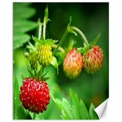 Strawberry  Canvas 16  X 20  (unframed) by Siebenhuehner